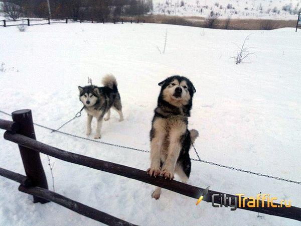 Гонка на собачьих упряжках чемпионата Arctic World Series впервые стартовала в Ширяево | CityTraffic