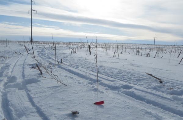 В Самарской области браконьера нашли по следу от протектора снегохода | CityTraffic