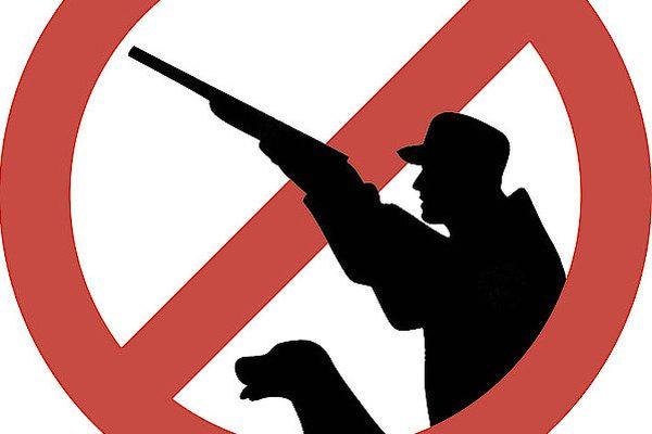 В одном из районов Самарской области из-за АЧС запретили охоту | CityTraffic