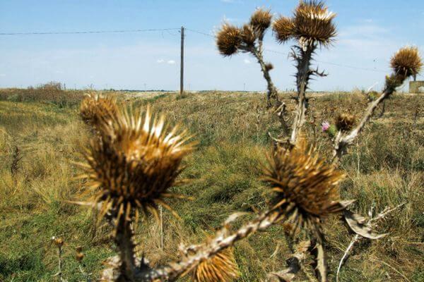 В Самарской области нашли еще 20 га заброшенных сельхозугодий | CityTraffic