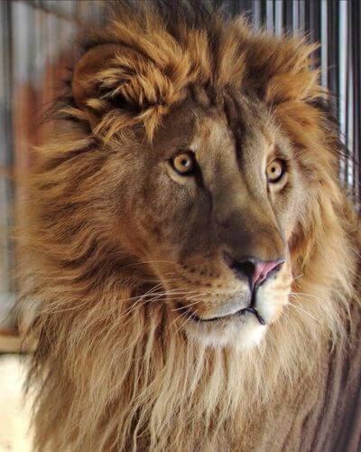В Самаре из-за угрозы распространения коронавируса закроют зоопарк | CityTraffic