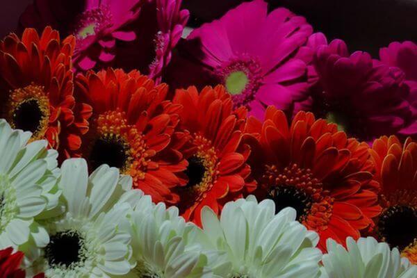 В Самаре на посадку цветов в скверах и парках планируют направить 79,4 млн рублей | CityTraffic