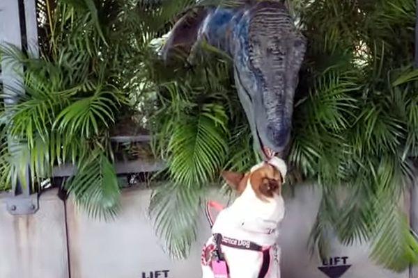Пес не обращает никакого внимания на динозавра, который хочет с ним поиграть: видео | CityTraffic