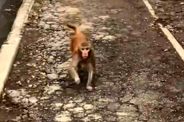 На улице Тольятти обезьяна напала на девочку, которая снимала ее на видео | CityTraffic