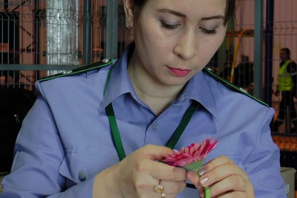 Какие цветы в аэропорту Курумоч перед праздником не попадают в топку: видео | CityTraffic