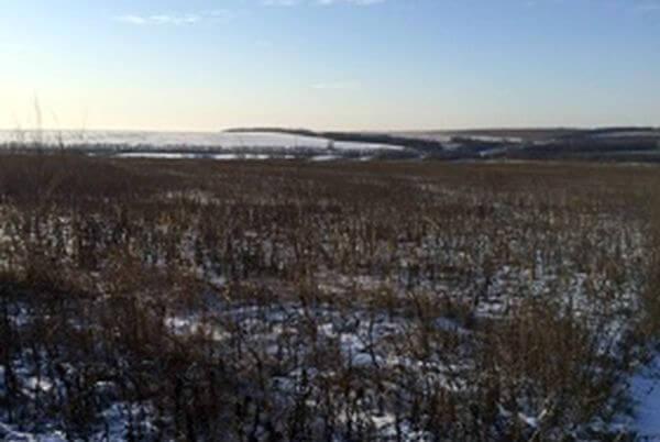 В Самарской области обнаружили 204 га заросшей земли   CityTraffic