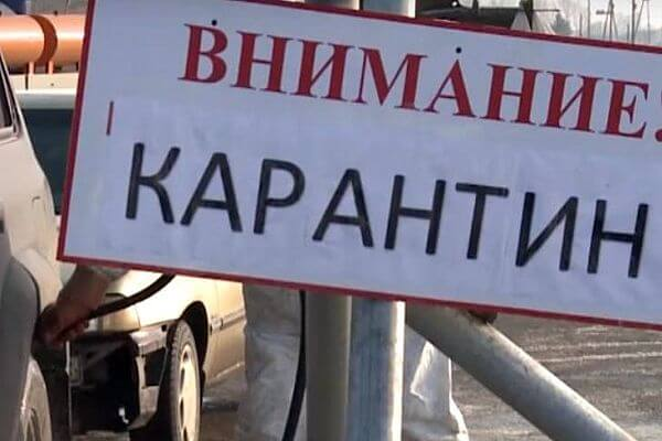 В трех селах Самарской области ввели карантин по бешенству | CityTraffic