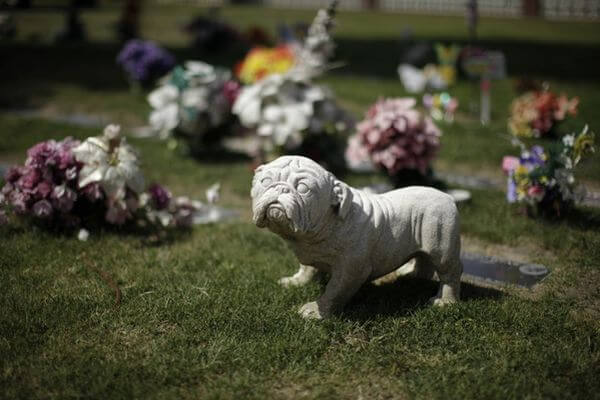 Россияне требуют обустраивать кладбища домашних животных в черте города | CityTraffic
