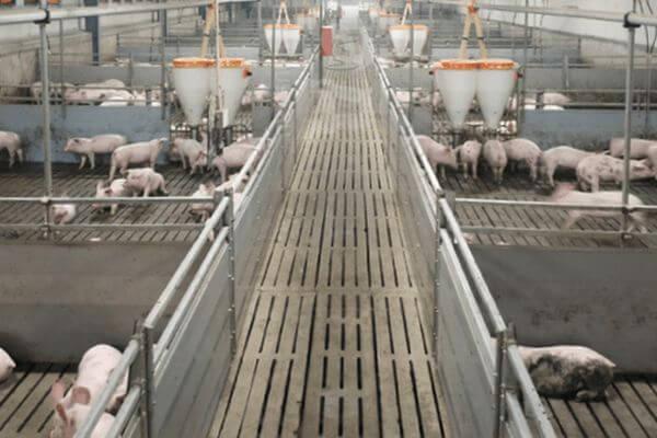 АСВ за 1,4 млрд рублей хочет продать права требования «Газбанка», обеспеченные имуществом Самарского Агрохолдинга | CityTraffic