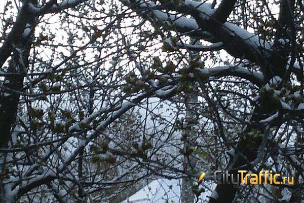 В Самарскую область вернулась зима   CityTraffic