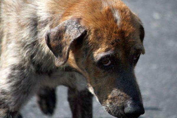 В Самарской области предлагают ужесточить контроль за ловцами  безнадзорных животных | CityTraffic
