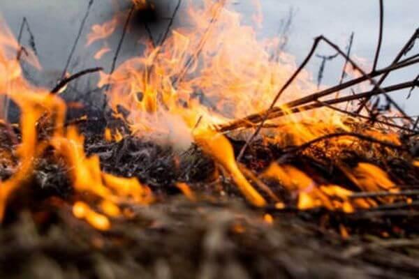 В Самарской области особый противопожарный режим введут на неделю раньше срока | CityTraffic