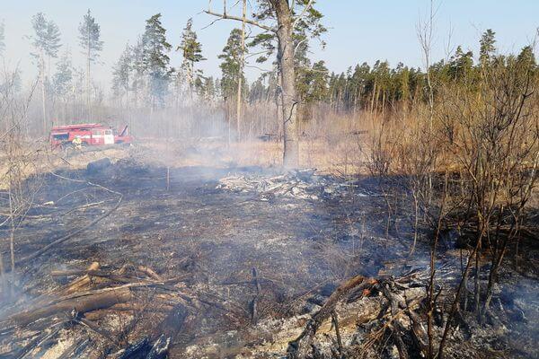 Жители Самарской области за сутки устроили 92 пожара, поджигая траву: видео | CityTraffic