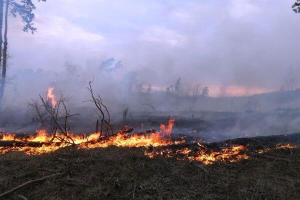 За сутки в Самарской области 4 раза горела трава | CityTraffic