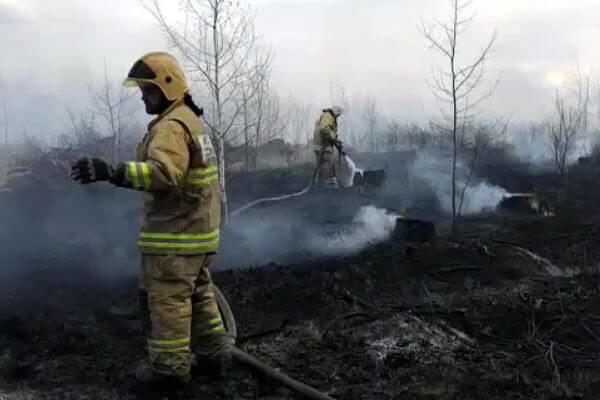 В Тольятти лесной пожар 5 часов тушили 130 человек и 31 единица техники | CityTraffic