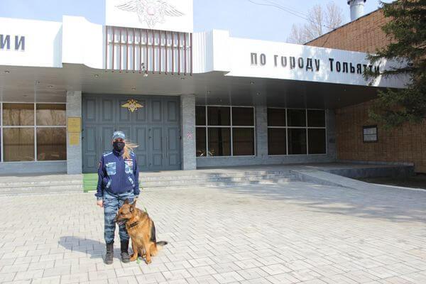 Немецкая овчарка вывела на след грабителя комиссионки в Тольятти | CityTraffic