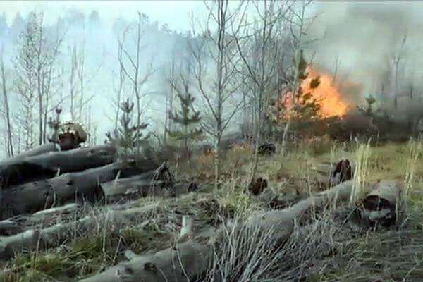 В лесу Тольятти загорелся валежник на площади почти 7 га: видео | CityTraffic