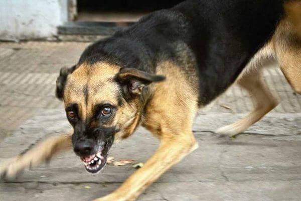 В Самарской области собака заразилась бешенством и кинулась на хозяйку | CityTraffic