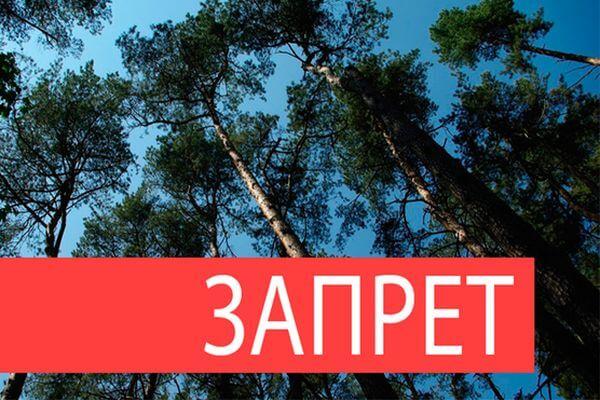 Жителям Тольятти запретили ходить в городские леса в период майских праздников | CityTraffic