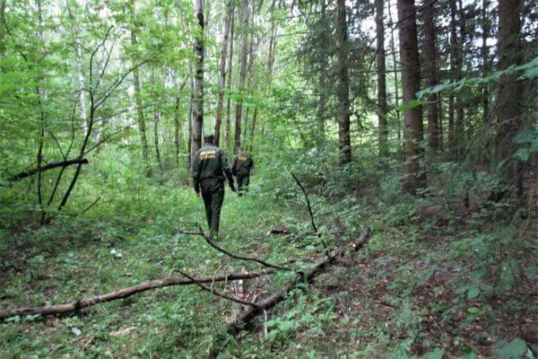 В леса Самарской области выходят усиленные патрули в поисках нарушителей   CityTraffic