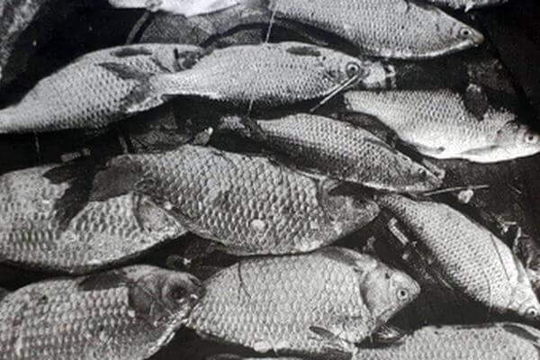 Рыбак из Самарской области незаконно наловил карасей и плотвы на 7,5 тысяч рублей | CityTraffic