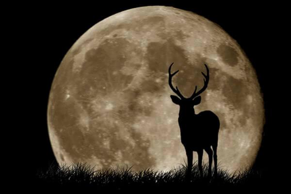 Затмение Оленьей Луны произойдет 5 июля | CityTraffic