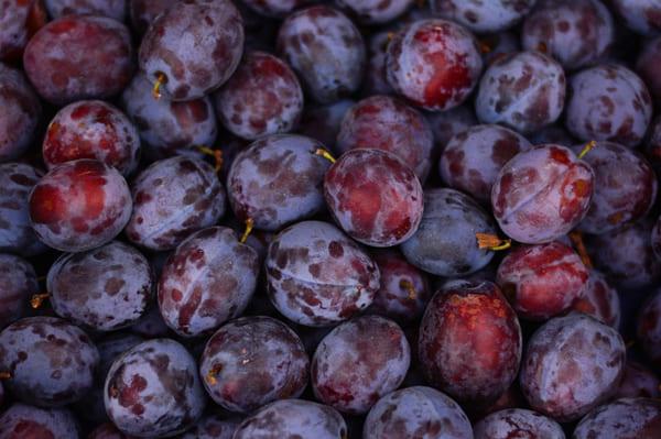 Из Узбекистана вместе со сливами в Самару привезли сельскохозяйственных вредителей | CityTraffic