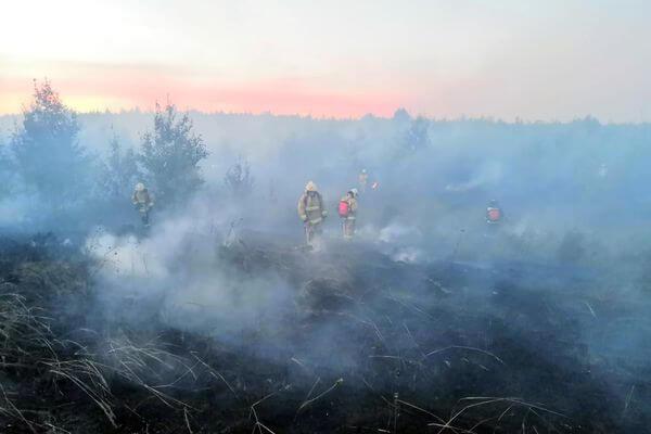 В Тольятти горел лес на площади 3,2 га | CityTraffic