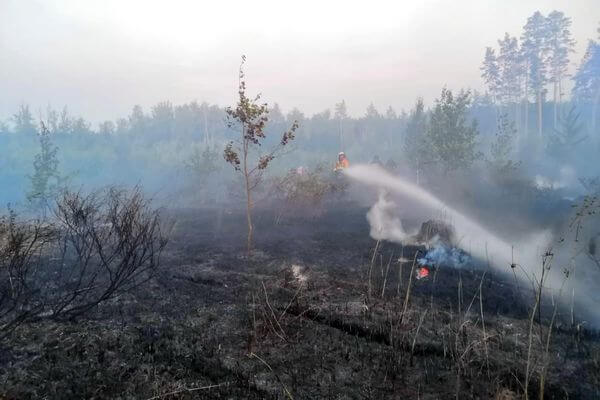 Горящий лес в Тольятти тушили 4,5 часа   CityTraffic