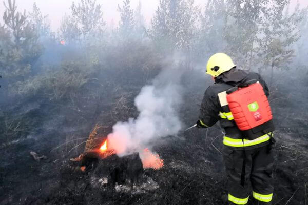 В Тольятти горел лес на площади 3,2 га   CityTraffic