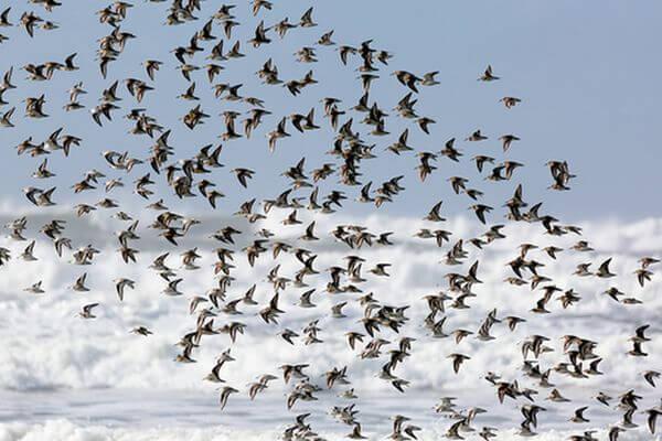 В Самарской области сосчитают птиц | CityTraffic