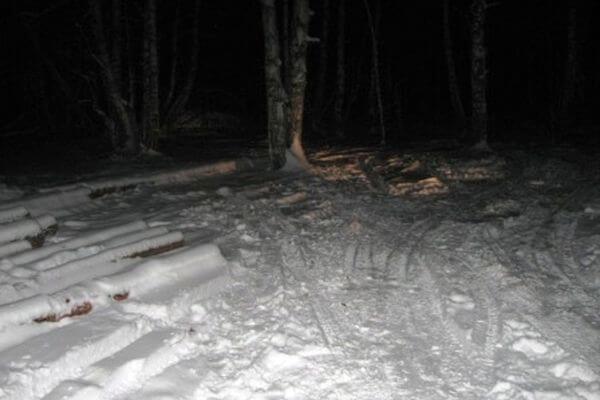 Жителя Самарской области будут судить за вырубку 12 деревьев | CityTraffic