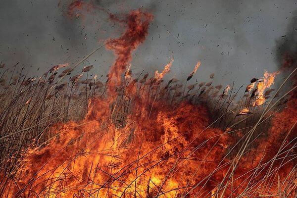 Пожар на озере в Ширяево угрожал селу | CityTraffic