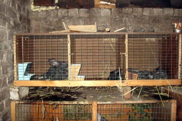 Два подростка украли у соседки 9 кроликов, чтобы заняться их разведением   CityTraffic