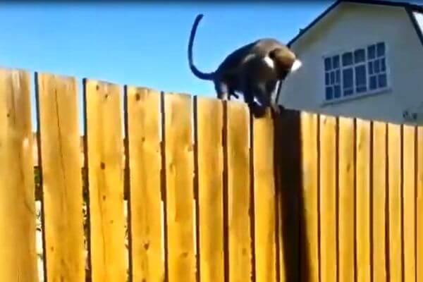 В поселке под Москвой несколько часов ловили обезьяну: видео | CityTraffic