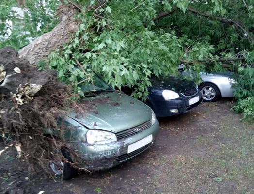 Поваленные остановки и поврежденные машины: жители Тольятти подсчитывают убытки после ночной грозы   CityTraffic