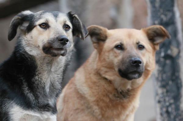 В 2021 году муниципалитеты Самарской области получат 37,9 млн рублей на отлов бездомных животных | CityTraffic