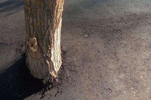 В парке Гагарина в Самаре асфальт уложили прямо на корни деревьев | CityTraffic