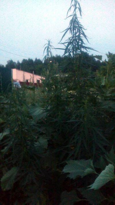 Жительницу Самарской области задержали на улице с марихуаной | CityTraffic