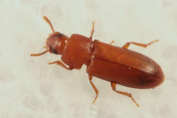 Жительницу Самарской области напугали жуки, которые поселились в ее доме | CityTraffic