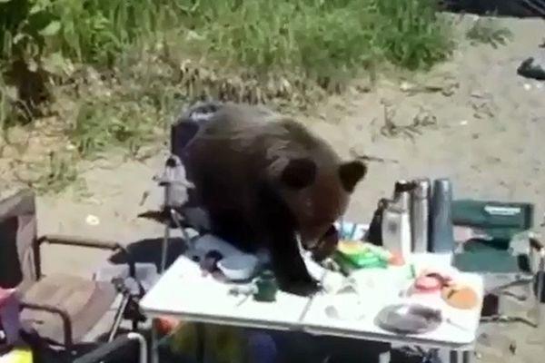 В Магаданской области медведь вышел к отдыхающим и съел их еду: видео | CityTraffic
