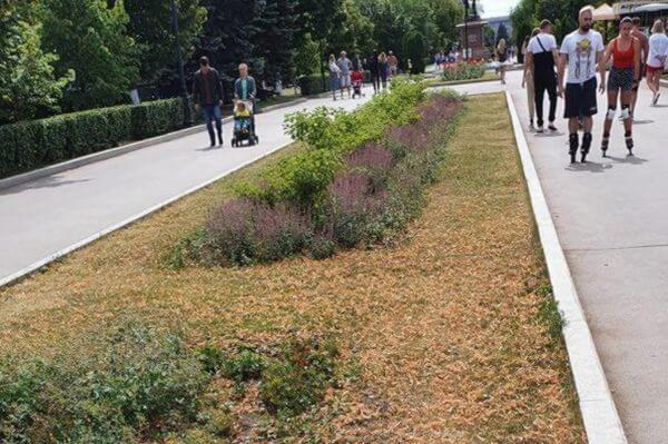 Самарцы обратили внимание на газоны, которые засыхают на второй очереди набережной | CityTraffic