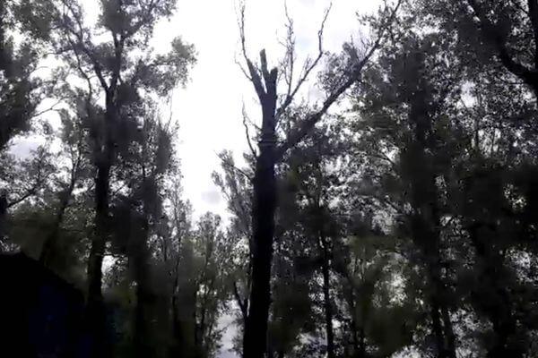 Главу села из Самарской области будут судить за гибель ребенка, на которого упала ветка дерева | CityTraffic