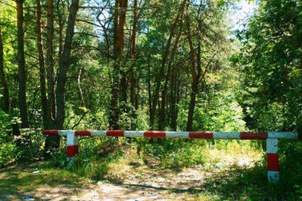 В Самарской области запретили бывать во всех лесах до 4 сентября | CityTraffic
