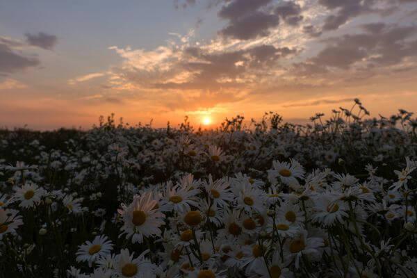 На Самарскую область движется потепление | CityTraffic