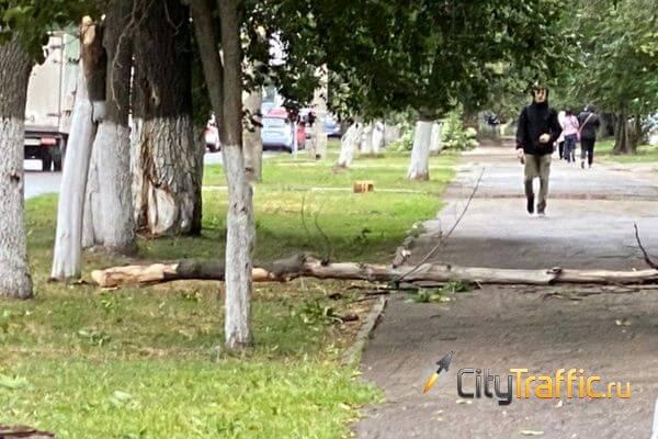 Во вторник в Самаре ветер свалил 31 дерево | CityTraffic