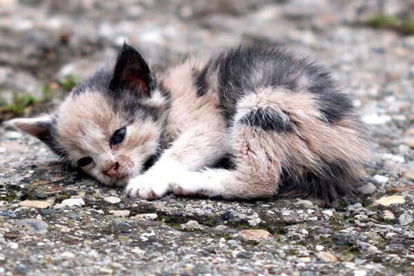 В Самаре живодера, убившего котенка, посадили на 3 года в колонию-поселение | CityTraffic