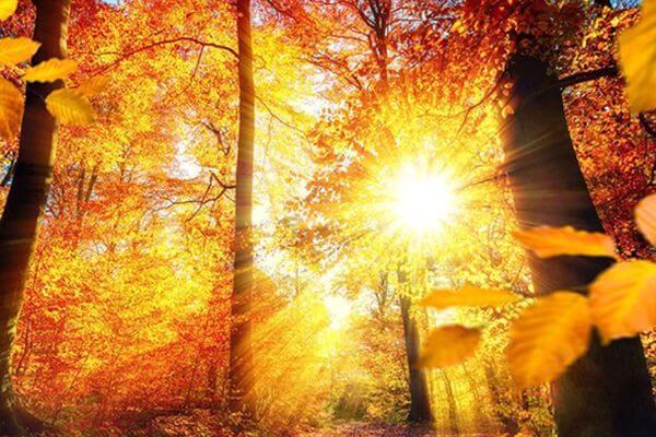 Бабье лето сделает октябрь более теплым, чем обычно, в Самарской области | CityTraffic