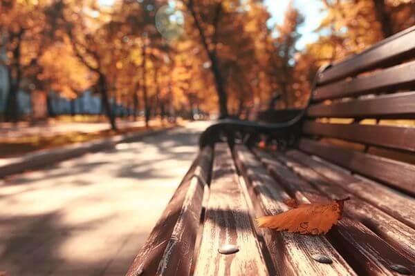 Вечером во вторник наступит астрономическая осень | CityTraffic