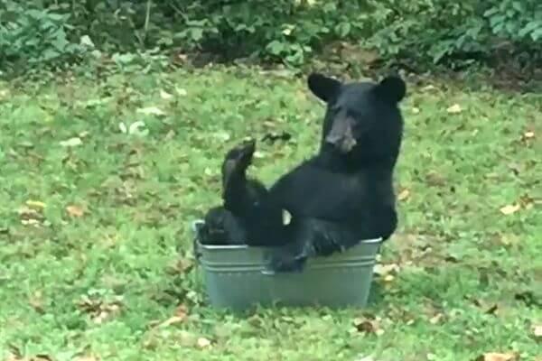 Медведю не хватило только пива, чтобы насладиться отдыхом в тазу с водой: видео | CityTraffic